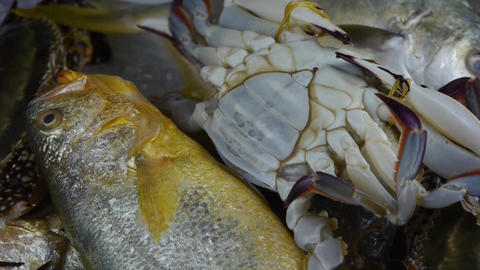 Delicious crab & Croaker Pomfret fish,within dial... Stock Video Footage