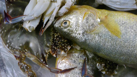Delicious Croaker Pomfret fish & crab,within dial... Stock Video Footage
