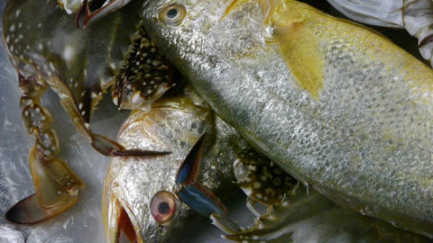Delicious Croaker Pomfret fish & crab,within dial plate.fisheries ice frozen Footage