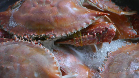 Cooking Steamed delicious crabs in boiling foam Stock Video Footage