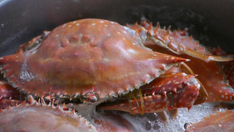 Cooking Steamed delicious crabs in boiling foam pot Stock Video Footage