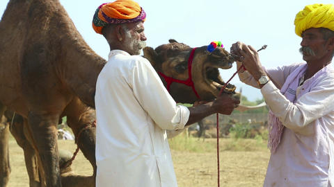 Pushkar camel fair Footage