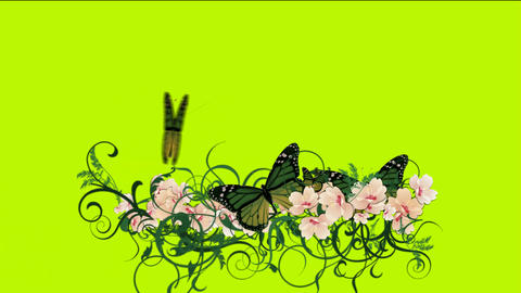 butterfly & flower Stock Video Footage