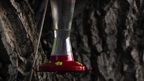 Hummingbird drinking from a bird feeder multiple times Footage