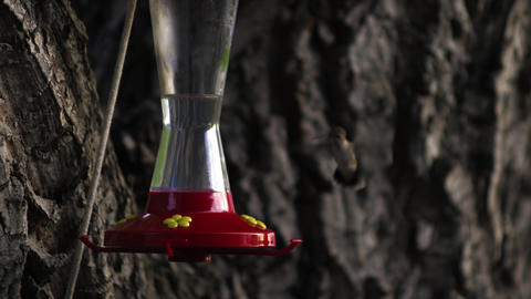 Hummingbird flying up to a bird feeder Footage
