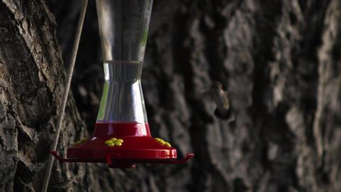 Hummingbird flying up to a bird feeder Footage