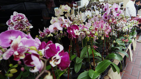 Beautiful Orchids at a San Francisco open market Footage