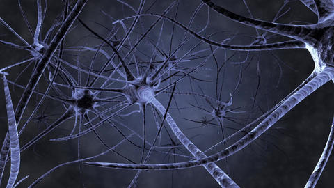 Neurons in action Nerve impulse Animation