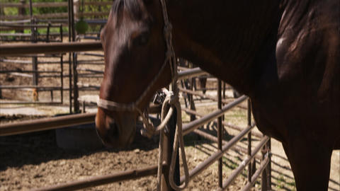 Static shot of a solitary horse standing in a corral Footage