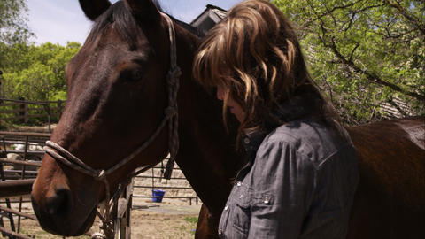 Slow motion shot of a woman brushing a horse's cheek Footage