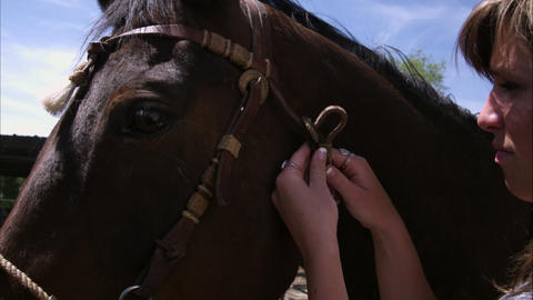 Up close view of horse while girl tightens riens Footage