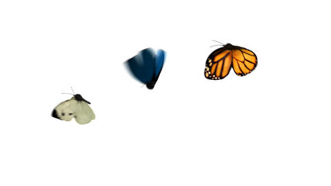 Butterflies Fly One After Another on a Green Background Animation