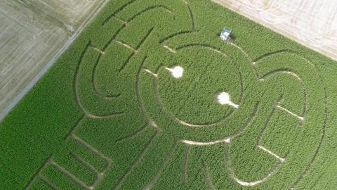 Elephant corn maze high round pan aerial 4k Footage