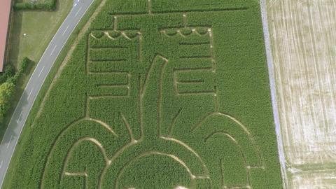 Elephant corn maze aerial drone Live Action
