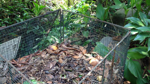 throw organic trash to the compost cage Stock Video Footage