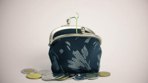 Plant growing from wallet, pile of coins, money business finance growth concept Live Action