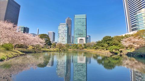 Beautiful Sakura at urban oasis(famous japanese garden in Tokyo) Photo