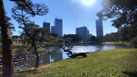 Peaceful japanese garden in Tokyo.Urban Oasis Live Action