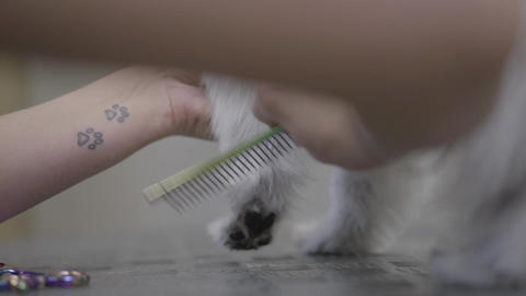 Adorable dog in barber pet. Pet grooming salon. Groomer combing a dog Live Action