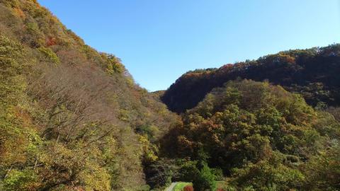 Autumn Leaves Aerial Shoot 「帝釈峡」紅葉(4k空撮素材) stock footage