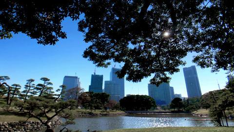 風に揺れる樹々と美しい日本庭園、心安らぐ都会のオアシス、東京、旧芝離宮恩賜庭園 ビデオ