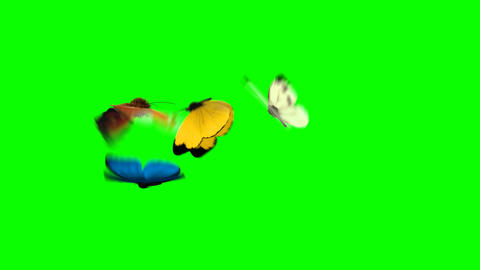 Four Butterflies Fly on a Green Background Videos animados
