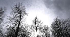 Bare Tree Silhouettes and Grey Cloudy Sky in Time Lapse Footage