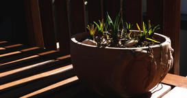 Shadows over Ceramic Pot with Plant Bulbs in Time Lapse Footage