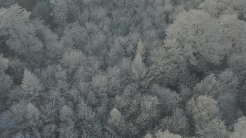 Forward flight over frozen trees 10bit Live Action