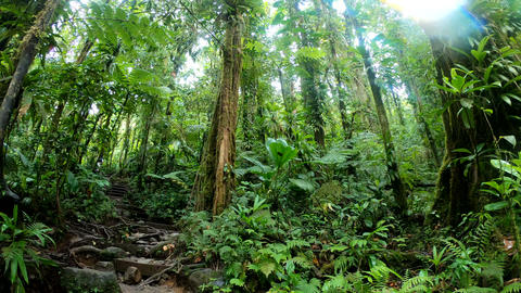 Panoramic view of Basse Terre jungle in Guadeloupe. Lesser Antilles, Caribbean Live Action