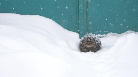 the cat is sitting in the snow Footage
