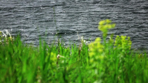 grass sways in the wind with lake waves at background 02 Footage