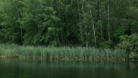 reeds on the bank of the Forest River 4K 02 Footage