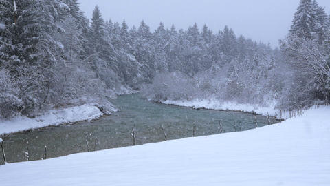 Snow-covered trees on the banks of the river in winter at a light snowing Footage