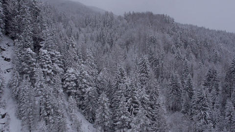 Aerial - Winter wonderland of delicate snow-covered trees Footage