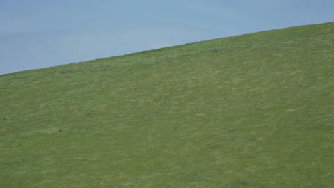 Green grass on a hill in a Californian wind farm Footage