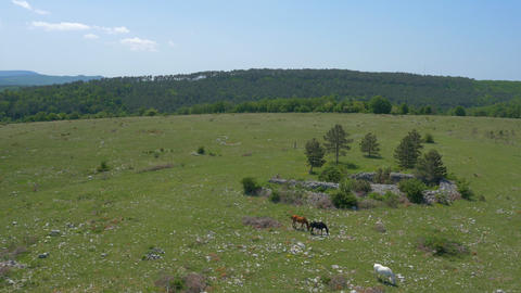 Aerial - Horses in pasture, landscape view Footage