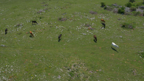 Aerial - High angle view of horeses pasturing on a meadow Live Action