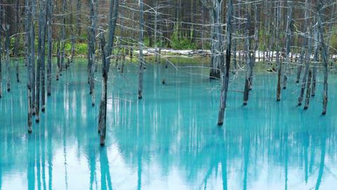 Blue Pond(Aoiike),Biei00003 Footage