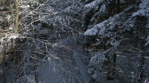 Aerial - Rising above the forest road past the snow-covered trees Footage