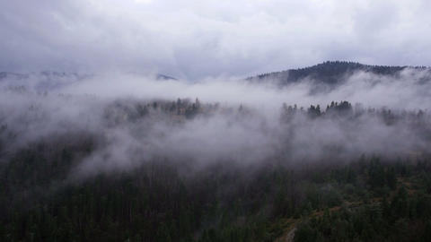 Aerial - Cloud-shrouded trees. Fog over pine tree forest Footage