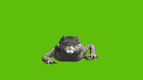 10 animated crocodile front view on green screen background Animation