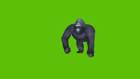 18 animated gorilla moves and attacks with green screen background Animation