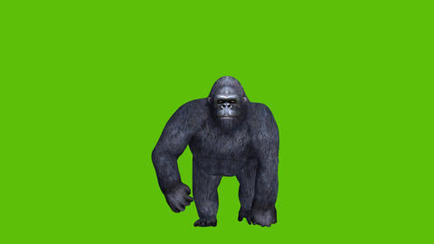 17 animation of gorilla with green screen background and front camera view Animation