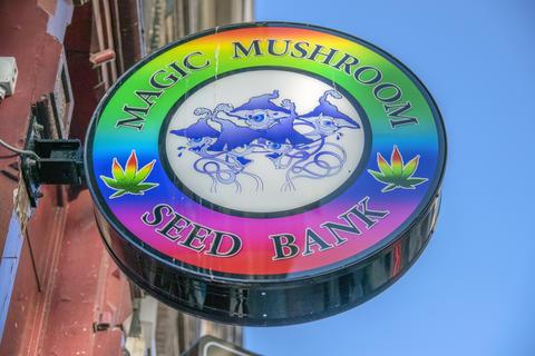 Billboard Magic Mushroom Seed Bank Shop At Amsterdam The Netherlands 2019 Photo