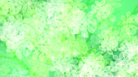 new leaves fresh green background1 Stock Video Footage