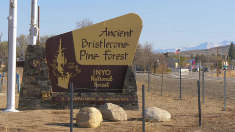 Ancient Bristlecone Pine Forest - LONE PINE CA, USA - MARCH 29, 2019 Footage