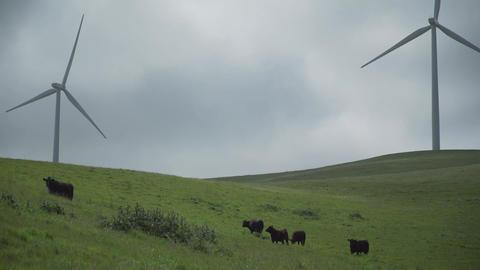 Cattle near two massive turbines in a Californian wind farm Footage