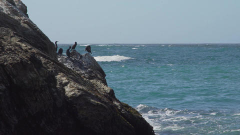 A cormorant suns itself on the rocks near Spooners Cove Beach Footage