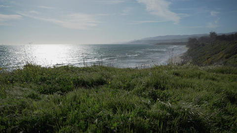 Wind blow grass near the beaches of Point Conception State Marine Reserve Footage